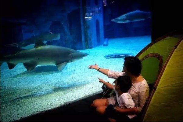 夜宿北京海洋馆,和海洋里的小动物们一起安然